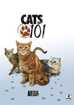 Cats 101 - Kediler