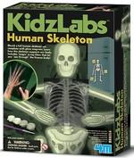 4M Glow Human Skeleton / Parlayan İskelet