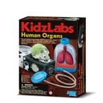 4M-Eğt.Set Kidzlabs Organlar 3374