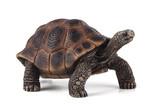 Animal Planet-Dev Kaplumbaga 7259