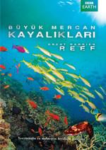 Great Barrier Reef - Büyük Meracan Kayalıkları