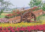 K.Color-Puz.500 Çiçek Arabası 34x49