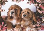 Keskin Color Puzzle 500 Köpekler ve Güller 34x49